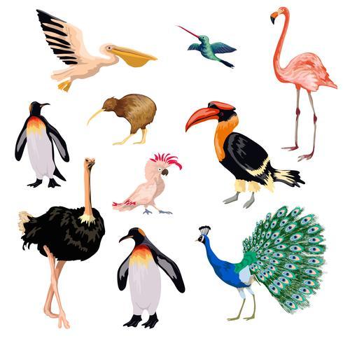 Set d'oiseaux exotiques vecteur