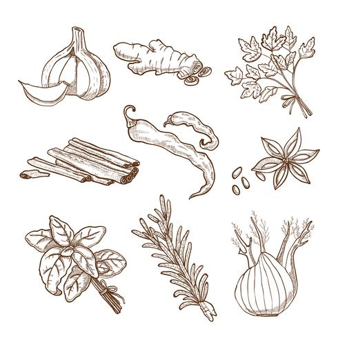 Ensemble d'herbes et d'épices dessinés à la main vecteur