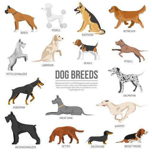 Set de race de chiens vecteur