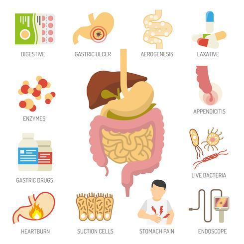 Système digestif Icons Set vecteur