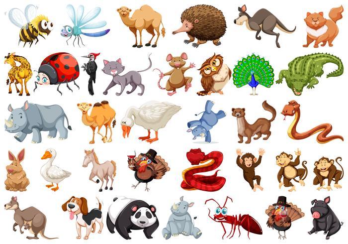 Ensemble d'animal de dessin animé vecteur