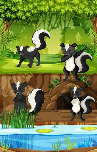 Quatre mouffettes dans la jungle vecteur