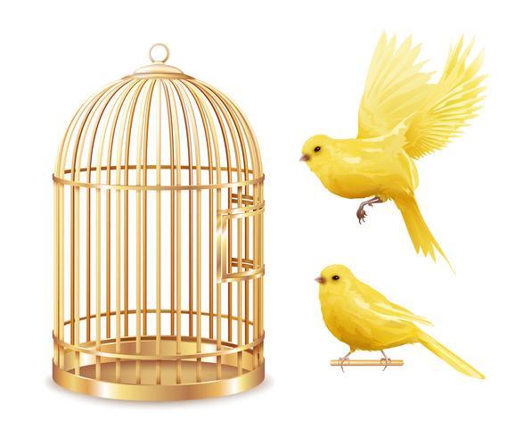 Ensemble de cage d'or des Canaries vecteur