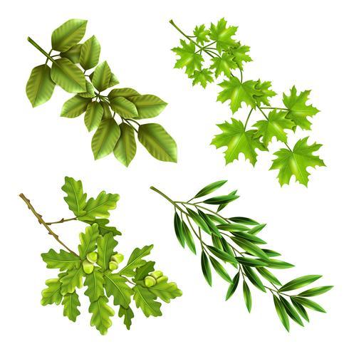 Branches vertes d'arbres à feuilles caduques vecteur