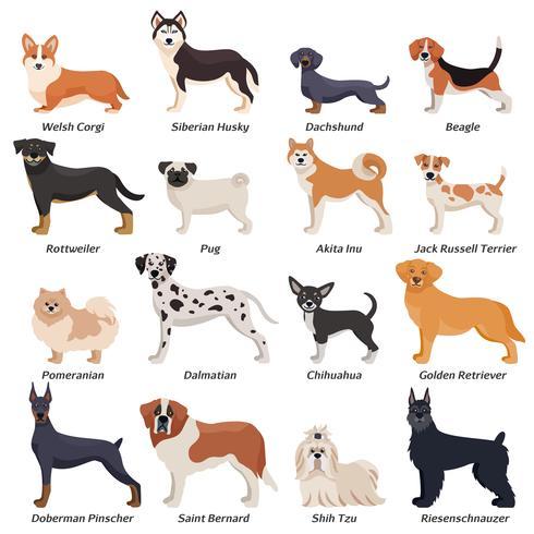 Jeu d'icônes colorées de chiens de race vecteur