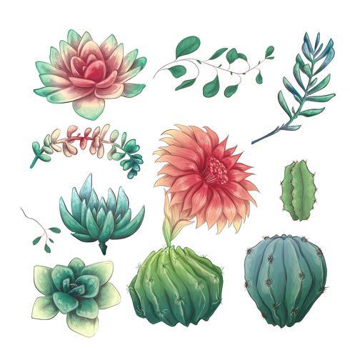 Cactus colorés dessinés à la main et ensemble succulent. Plante d'intérieur, cactus, plantes tropicales. vecteur