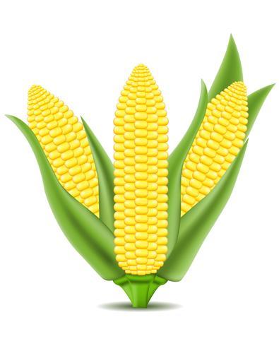 illustration vectorielle de maïs vecteur