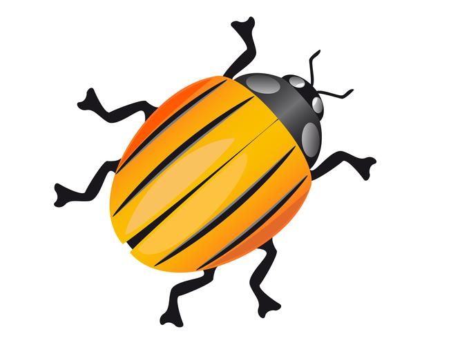 coléoptère colorado vecteur
