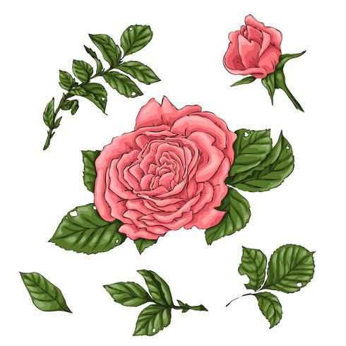 Définir des roses de corail. Main, dessin d'illustration vectorielle vecteur