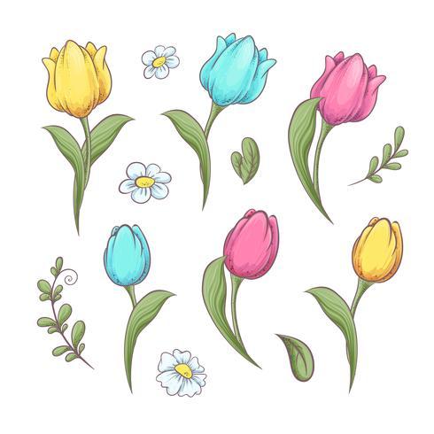 Définissez des tulipes à fleurs. Main, dessin d'illustration vectorielle vecteur