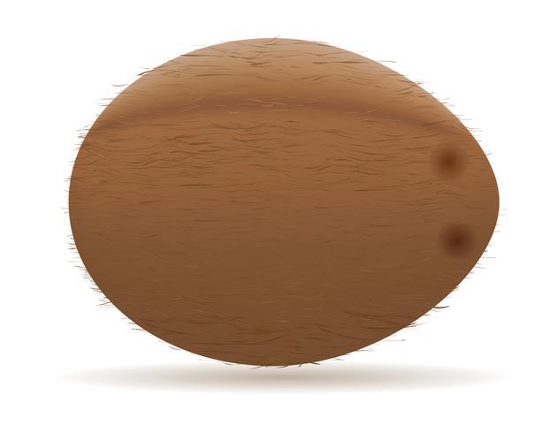 illustration vectorielle de noix de coco vecteur