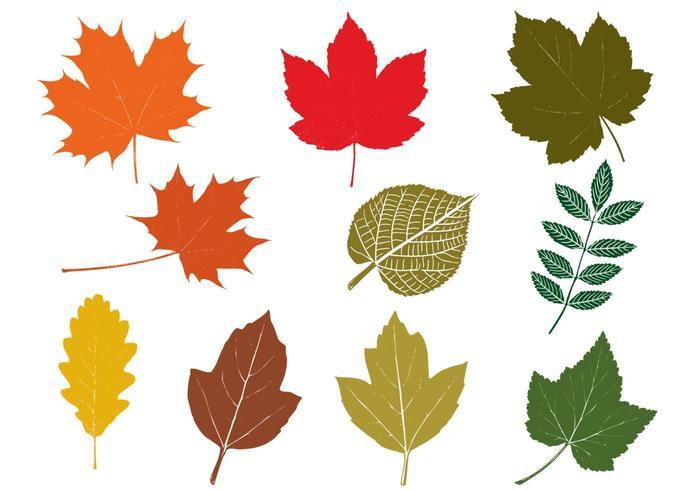 Pack de feuilles à l'automne vecteur