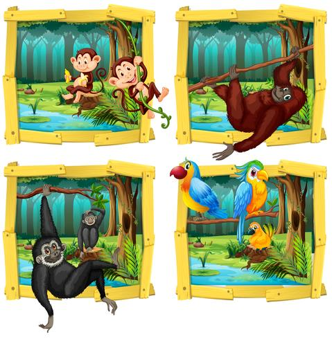Animaux sauvages dans un cadre en bois vecteur