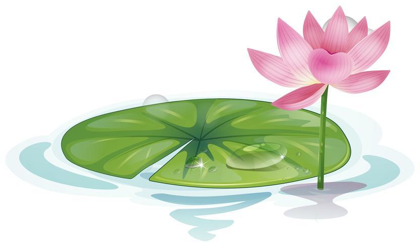 lotus vecteur