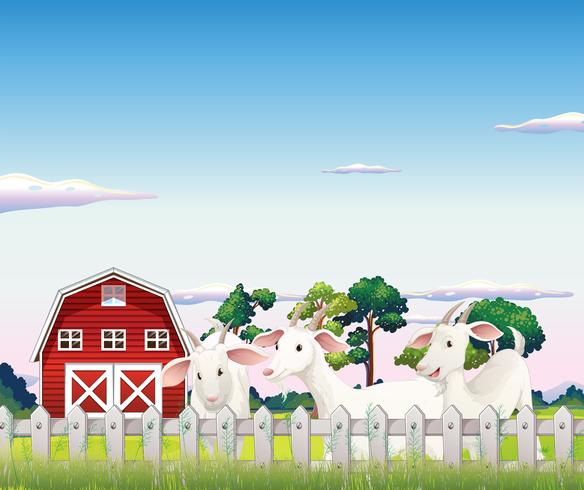 Trois chèvres à l'intérieur de la clôture à la ferme vecteur