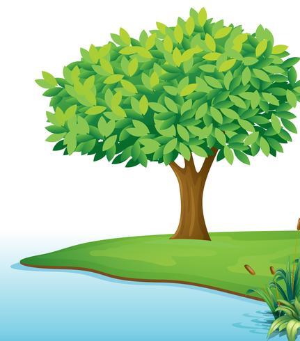 Un arbre près du plan d'eau vecteur