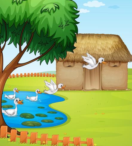 Des canards, une maison et un paysage magnifique vecteur