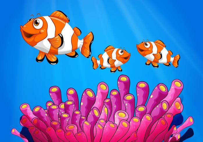 Poisson clown sous la mer vecteur