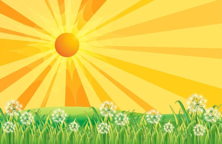 Rayons du soleil vecteur