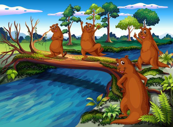 Quatre animaux sauvages au bord de la rivière vecteur