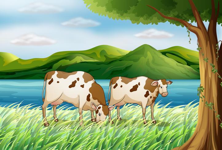 Une vache et un beau paysage vecteur