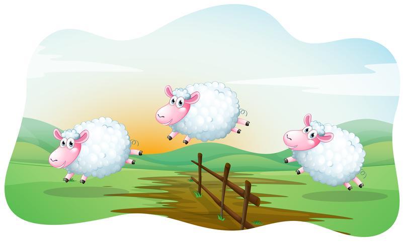 Des moutons vecteur