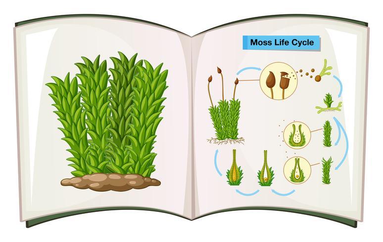 Livre montrant le cycle de vie de la mousse vecteur