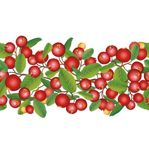 Modèle sans couture de canneberge Berry floral background. Nourriture d'été vecteur
