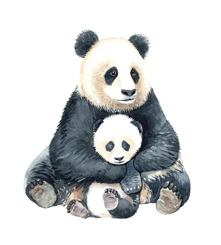Panda aquarelle et bébé panda. vecteur