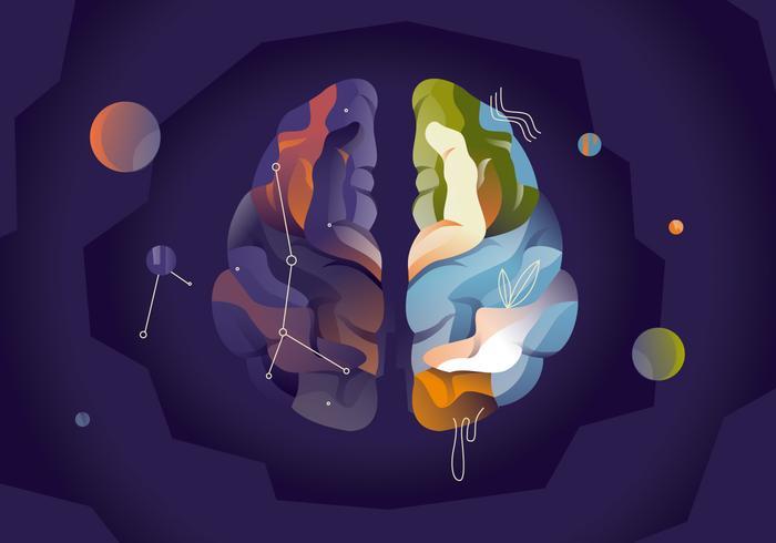 Couleur, vecteur, hémisphères, cerveau humain vecteur