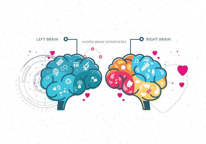 Vecteur cerveau humain hémisphères vol 2
