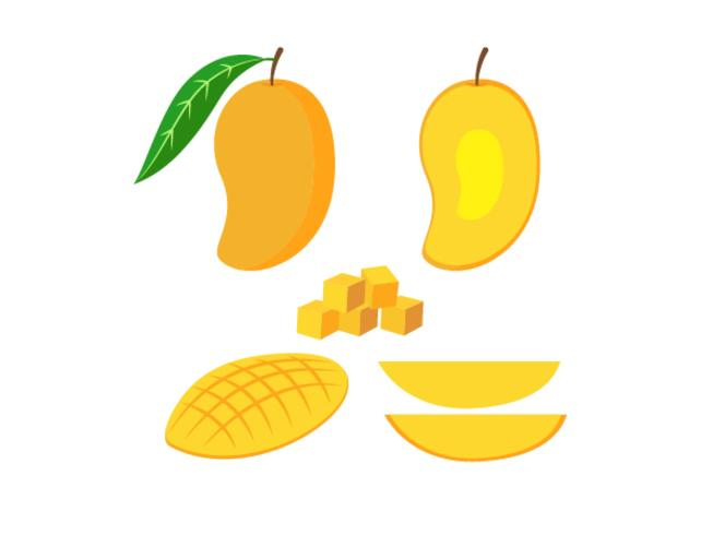 Illustration vectorielle de set mangue fraîche isolée sur fond blanc vecteur