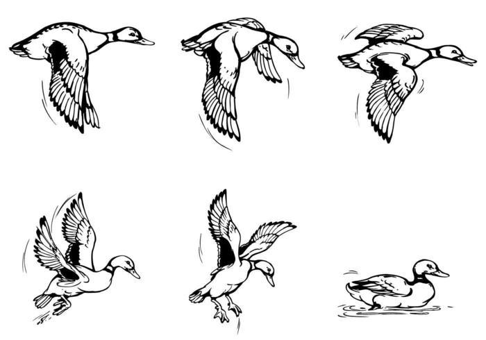Pack de brosses de canard volant vecteur
