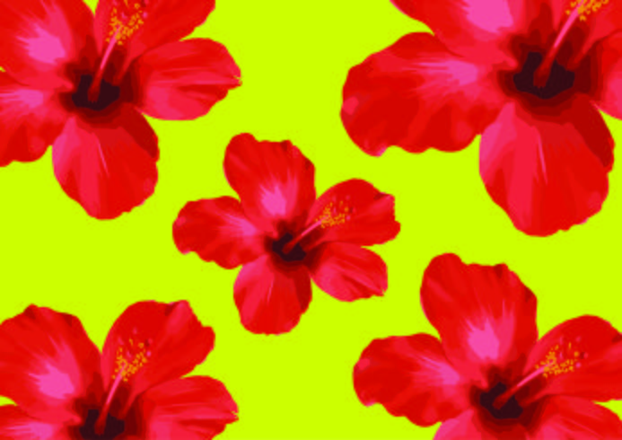 Fleurs d'hibiscus rouge, floral vector Illustration sur fond noir.