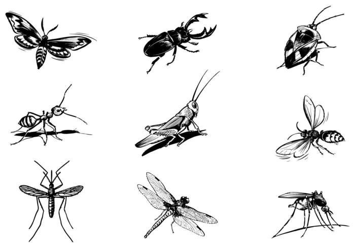 Ensemble Vecteur Divers Insectes