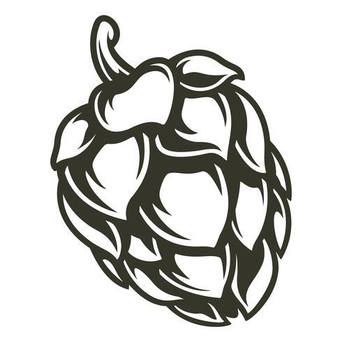 Illustration vectorielle de houblon vecteur