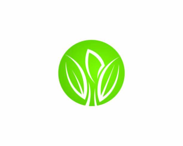 Logos de l'écologie des feuilles d'arbres verts vecteur