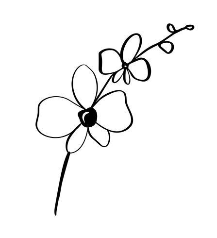 Fond floral beau vecteur monochrome avec branche d'orchidée avec des fleurs dans un style graphique. Logo d'icône illustration pour le design
