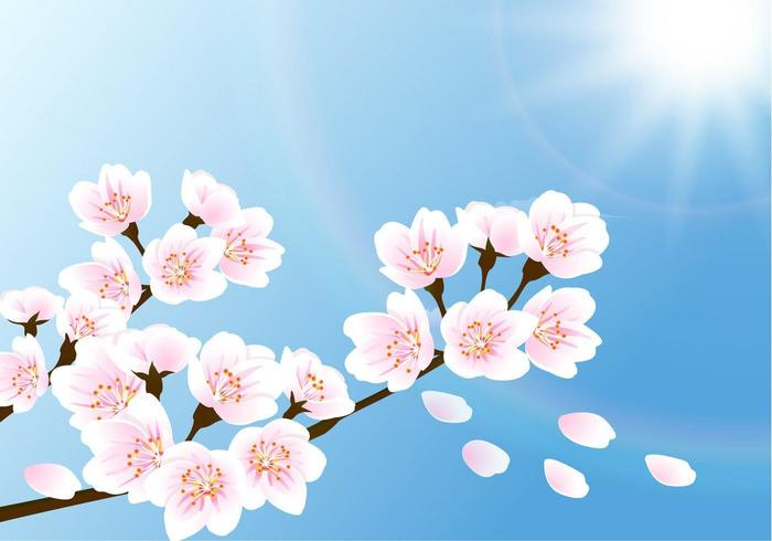 Vecteur de papier peint Cherry Blossom