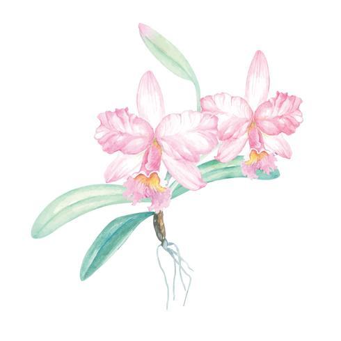 Aquarelle peinture orchidée 2 vecteur
