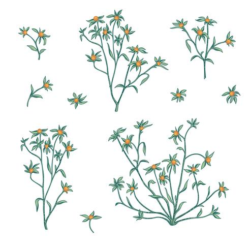 Jeu d'icônes d'été floral. Fleurs et baies symboles de la nature Vege vecteur