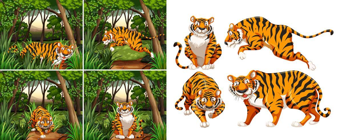 Tigre dans la forêt vecteur