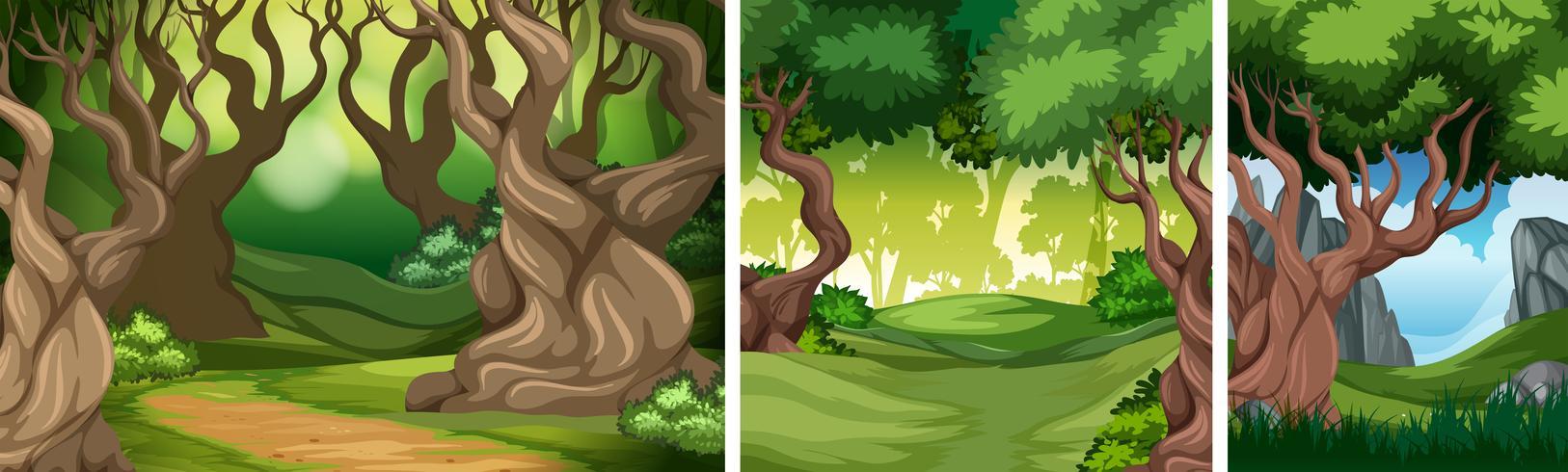 Ensemble de fond de forêt tropicale vecteur
