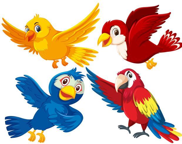 Ensemble de différents oiseaux vecteur