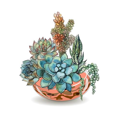 Succulentes dans des aquariums en verre. Sable coloré. Compositions décoratives de fleurs. Graphique. Aquarelle. Vecteur. vecteur