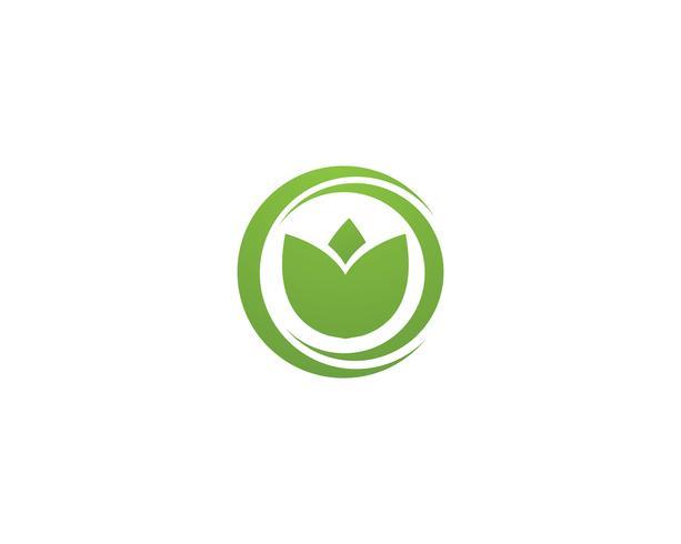 modèle de logo et symbole nature feuille verte vecteur