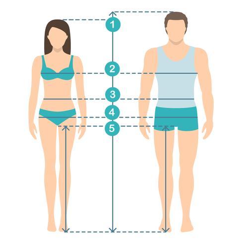 Illustration vectorielle de l'homme et de la femme en pleine longueur avec lignes de mesure des paramètres du corps. Mesures de tailles homme et femme. Dimensions et proportions du corps humain. Design plat. vecteur
