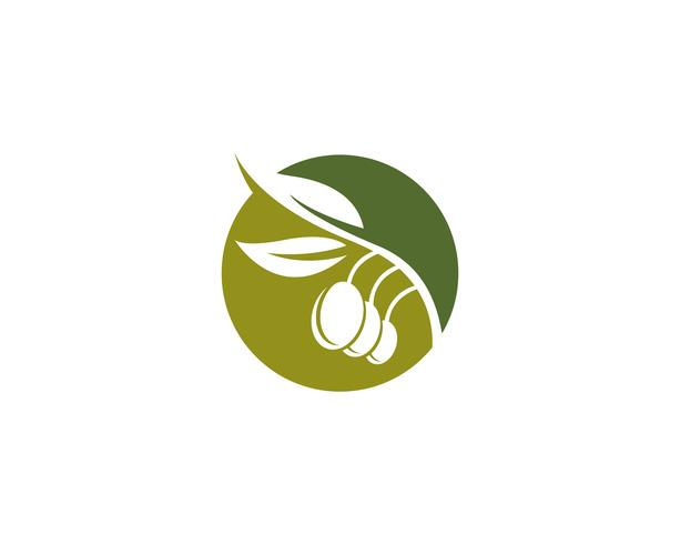 icône de vecteur pour le modèle logo olive