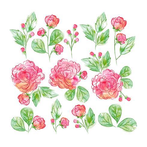 Set Floral Aquarelle vecteur