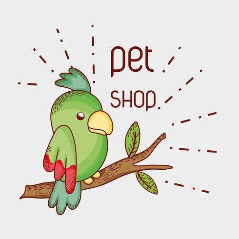 Perroquet sur animalerie branche branche vecteur